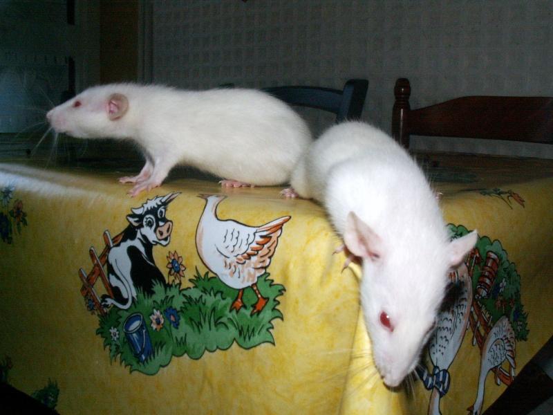 bébés de maya (news photos p.64/65) - Page 6 Pict0134