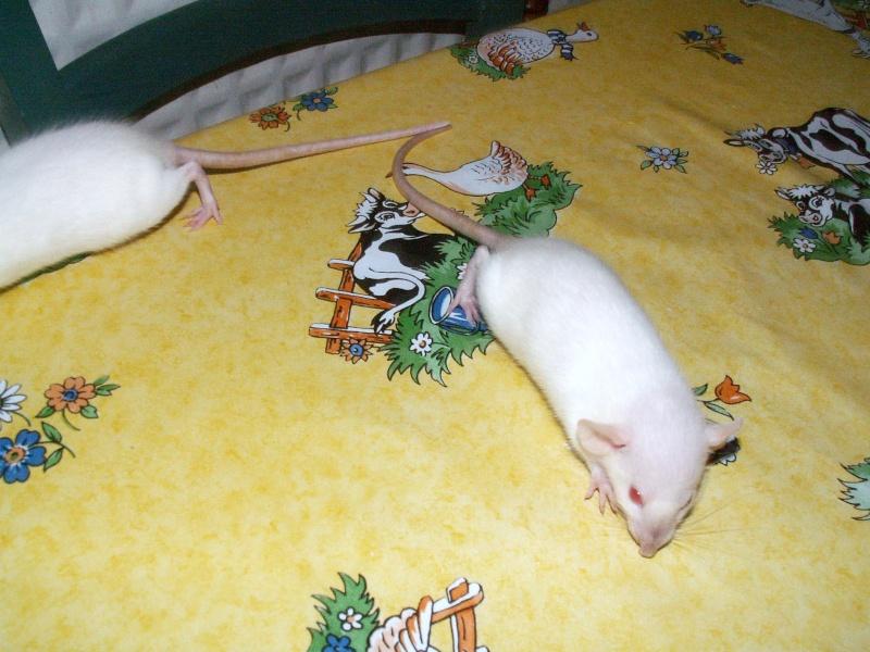 bébés de maya (news photos p.64/65) - Page 6 Pict0135
