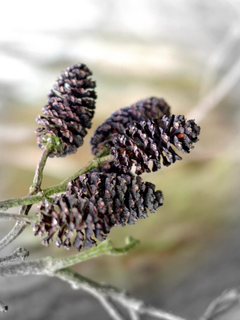 Dans l'attente du printemps ... Les bourgeons 01010116
