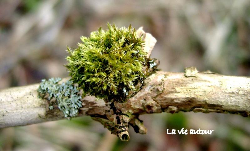 Dans l'attente du printemps ... Les bourgeons 01010122