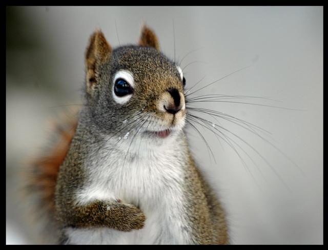 Aimez-vous les écureuils - Page 2 Ecureu10