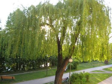 صور بعض أنواع الأشجار الموجودة في اقليم افران 41474010