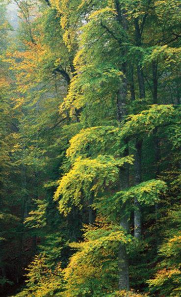صور بعض أنواع الأشجار الموجودة في اقليم افران 44804110
