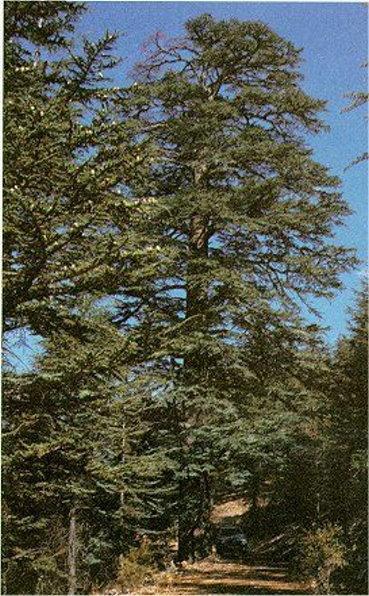 صور بعض أنواع الأشجار الموجودة في اقليم افران 46247810