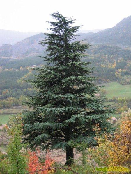 صور بعض أنواع الأشجار الموجودة في اقليم افران 57137311