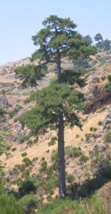 صور بعض أنواع الأشجار الموجودة في اقليم افران 70508410