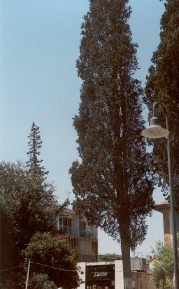 صور بعض أنواع الأشجار الموجودة في اقليم افران 72298610