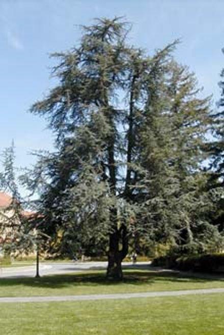 صور بعض أنواع الأشجار الموجودة في اقليم افران 73304210