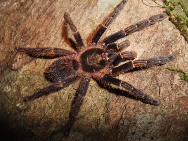 Pour éloigner les araignées 6510