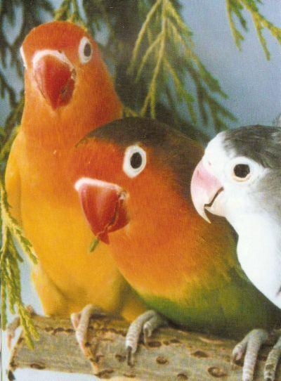 LOVE BIRDS 3_love10