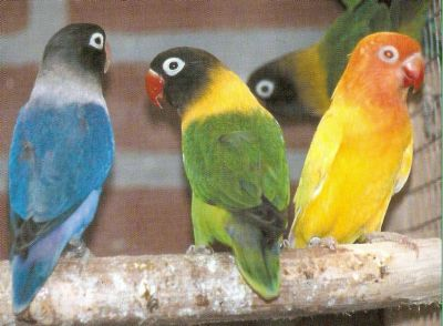 LOVE BIRDS 3_love11