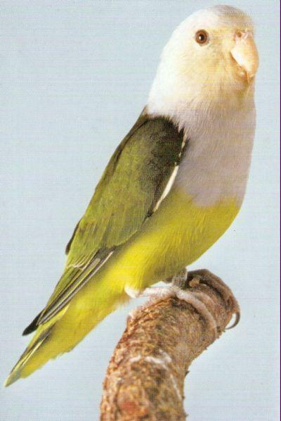LOVE BIRDS Grey_h10