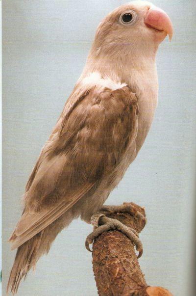 LOVE BIRDS Grey_l10