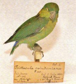 LOVE BIRDS Swider11