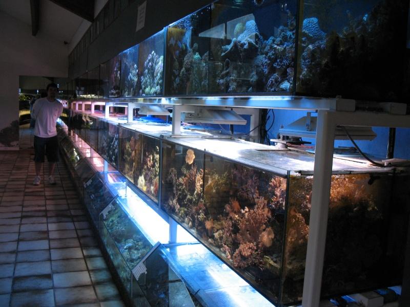 Visite chez Tropical Nguyen Img_4428