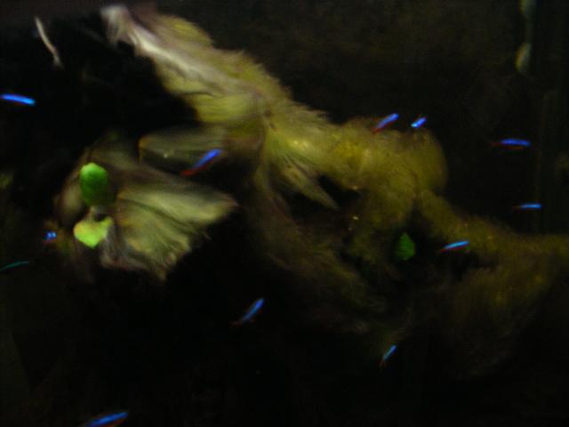problemed'algue Dscf9512