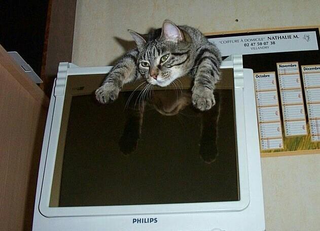 Posture originale pour dormir....et chez vous c'est comment??? - Page 3 0032_c10