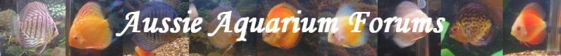 Aussie Aquarium Forum