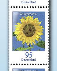 Sonnenblumen Sonnen10