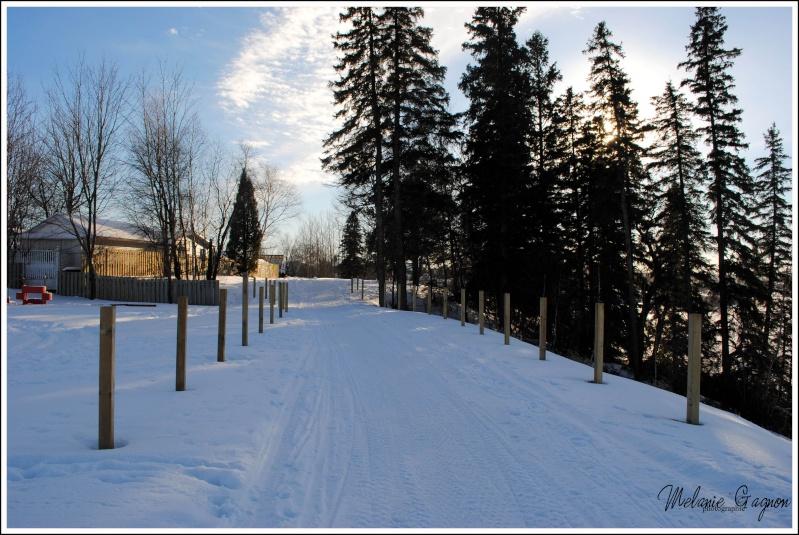 Promenade avec Stella - 29 décembre A00411
