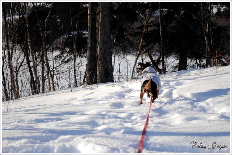 Promenade avec Stella - 29 décembre A00811