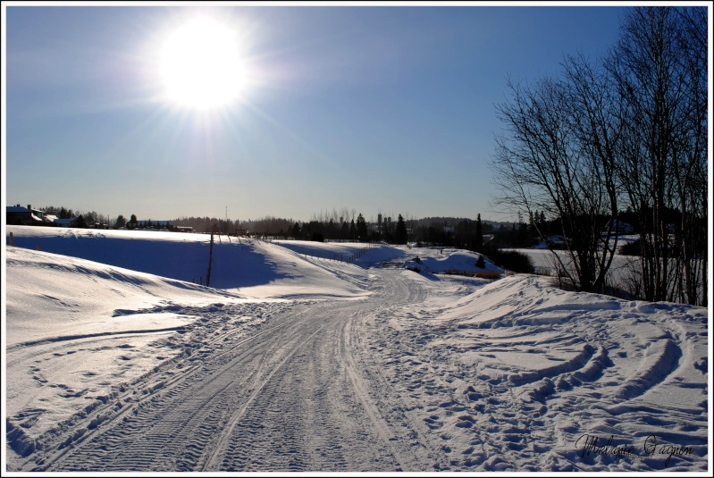 Promenade avec Stella - 29 décembre A01011