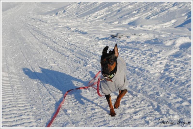 Promenade avec Stella - 29 décembre A01911