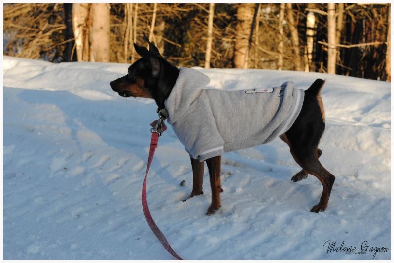 Promenade avec Stella - 29 décembre A03110