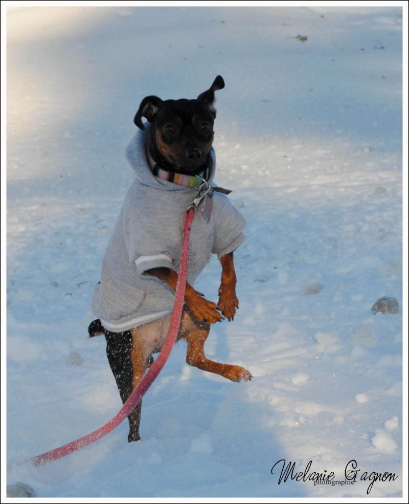Promenade avec Stella - 29 décembre A03810