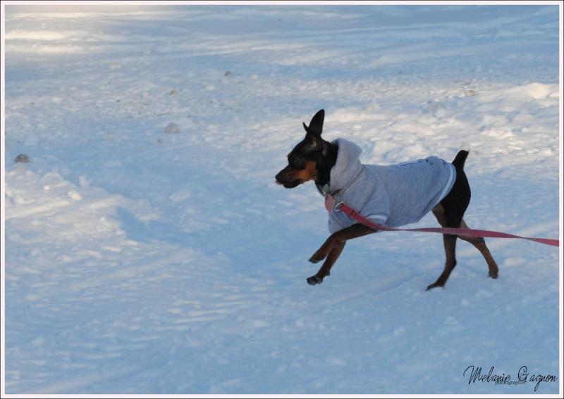 Promenade avec Stella - 29 décembre A03910