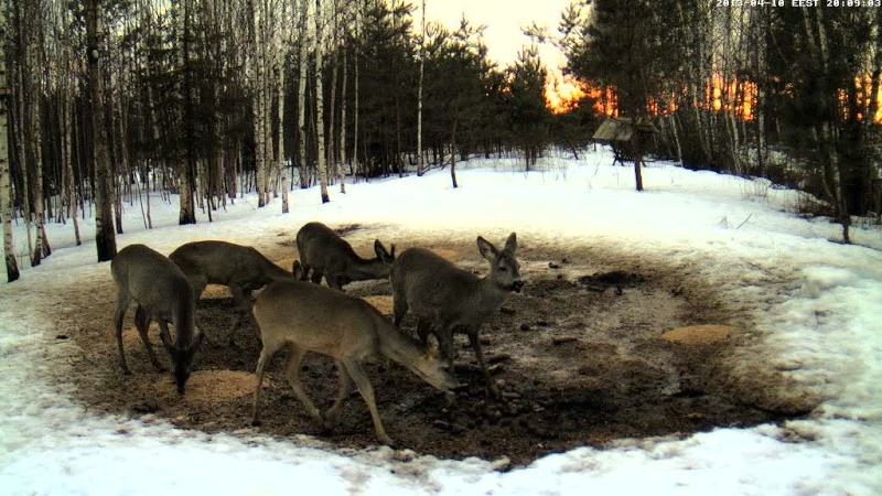 Boars cam, winter 2012 - 2013 - Page 32 Vlcsn172