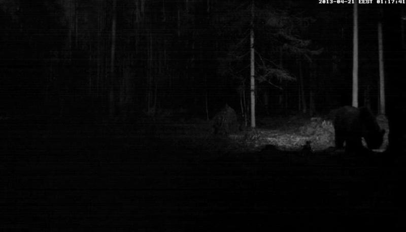 Alataguse Bear Cam 2013 - Page 2 Vlcsn176
