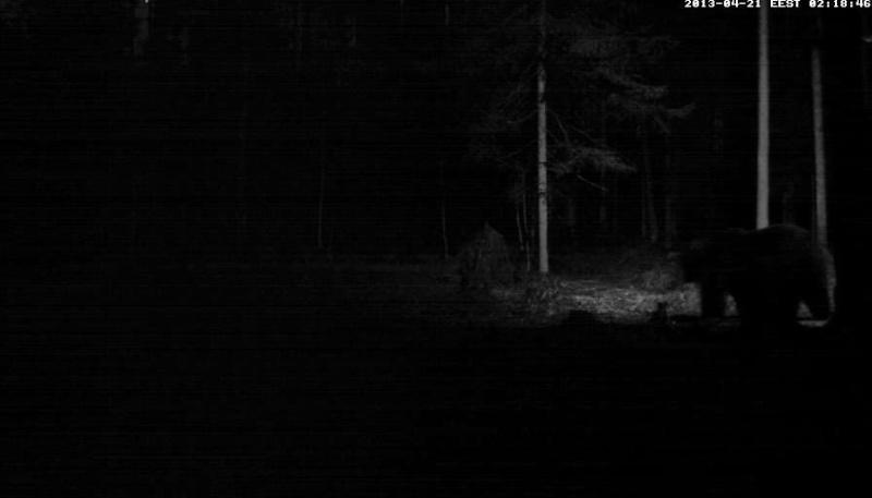 Alataguse Bear Cam 2013 - Page 2 Vlcsn179