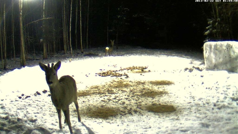 Boars cam, winter 2012 - 2013 - Page 18 Vlcsna28