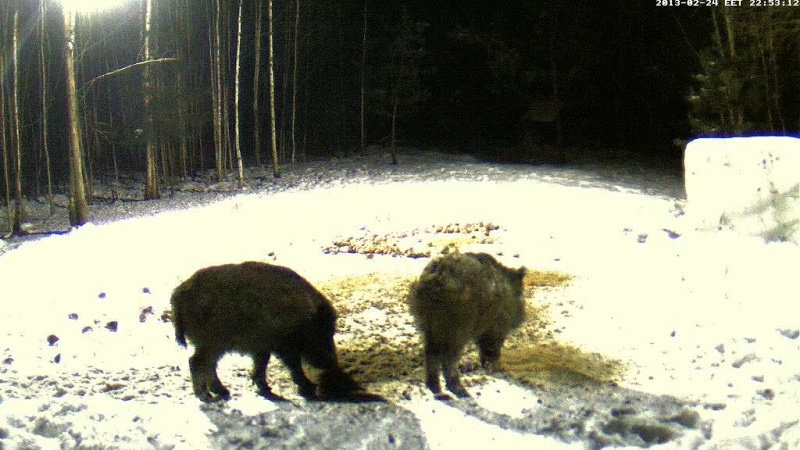 Boars cam, winter 2012 - 2013 - Page 18 Vlcsna33