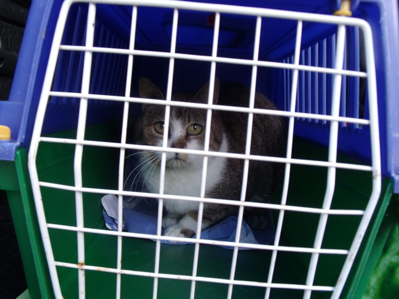 un p'tit coup de main des ptits korrigans pour une petite chatte nomade.... 4_avri10