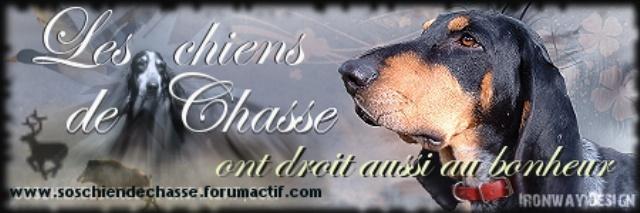 SOS CHIENS DE CHASSE Chiens10