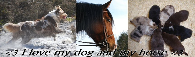 I LOVE MY DOG AND MY HORSE