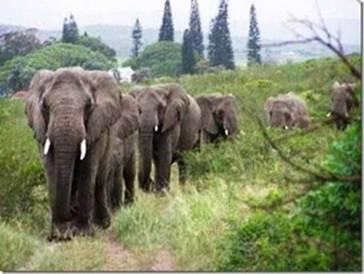 une mémoire d'éléphant Antony14