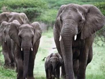 une mémoire d'éléphant Antony15