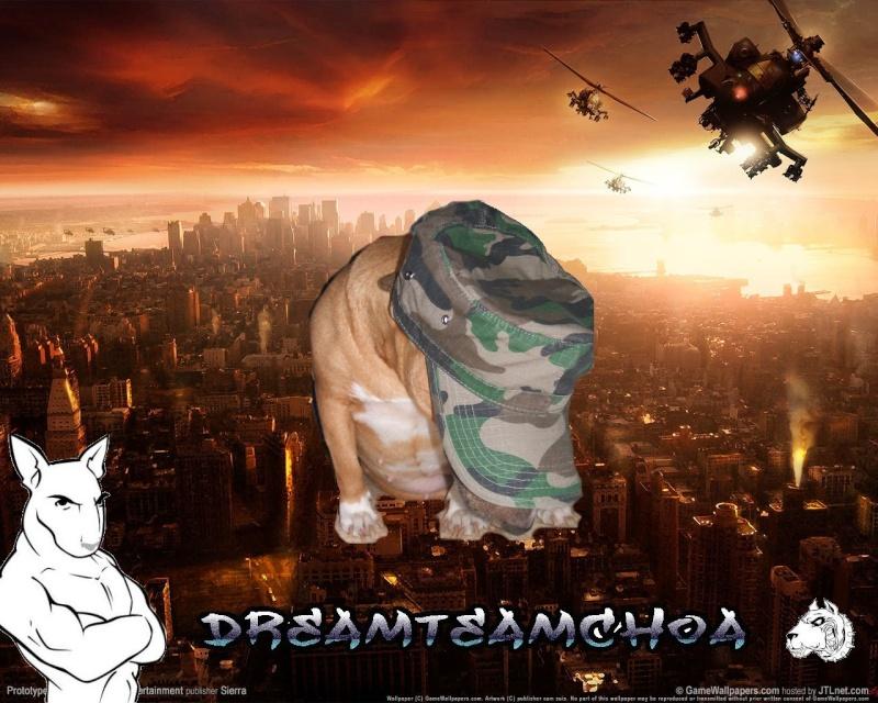 les 1 an de la dreamteamchoa ;) Protot10