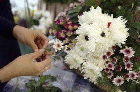Pour ceux qui sont allergiques aux poils... un joli petit bouquet !!! Att11110