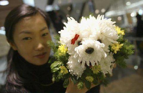 Pour ceux qui sont allergiques aux poils... un joli petit bouquet !!! Att22211