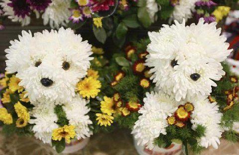 Pour ceux qui sont allergiques aux poils... un joli petit bouquet !!! Att33310