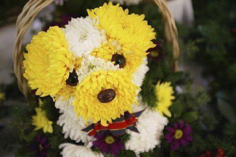 Pour ceux qui sont allergiques aux poils... un joli petit bouquet !!! Att44410
