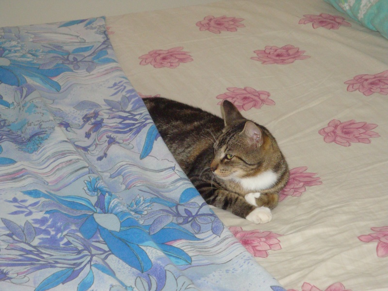 Un chat, un lit !!! Dsc01713