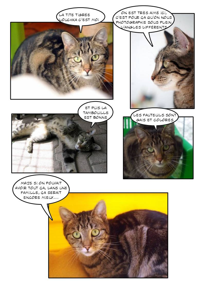 DOUCHKA (tigrée) - Page 2 Page_177