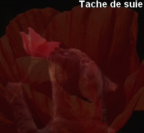 Ptitelili54 Galerie ! Tache_13