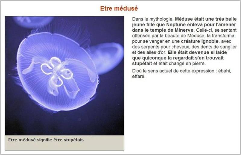 compte rendu corse 2010 (8 mai / 16 mai ) - Page 5 Meduse11