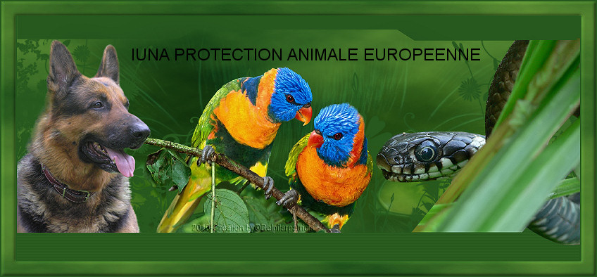 LUNA PROTECTION ANIMALE EUROPEENNE